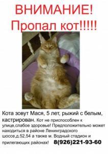 Пропал рыжий кот