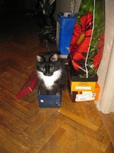 Пропала Кошка по кличке Маня