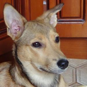Пропала собака по кличке Альма