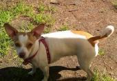 Пропала собачка в Московской области деревня Васютино