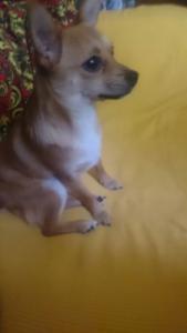 Пропала собака по кличке Мася