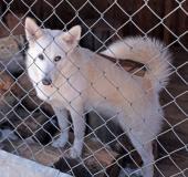 Найдена собака в Красногорске