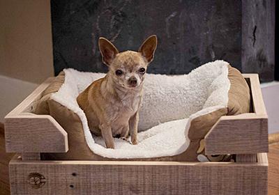 Цена за сутки проживания собаки среднего размера, включая питание и выгул
