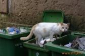 Киевсовет проголосовал за документ о признании котов частью экосистемы города.