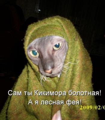 Магазин для котов в кургане